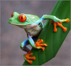 161 best 개구리 images on frogs frog tattoos and