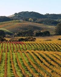 196 best wine country images on pinterest wine country