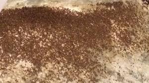 fourmis dans la cuisine un hameau du lot envahi par les fourmis 3 occitanie