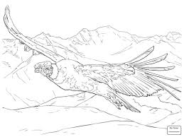 coloring pages for kids condors birds funny perched condor