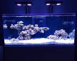 this live rock insert saltwater aquariums