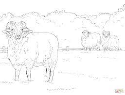 hog island sheep coloring free printable coloring pages