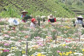 garden of eden flower shop edens flower farm in tupi south cotabato u2013 christine writes