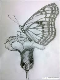 sketches of butterflies and flowers archives pencil drawing