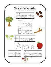 apple life cycle clipart clipartxtras