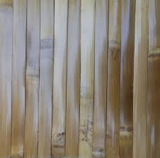 bamboo groups bamboo man lifestyles