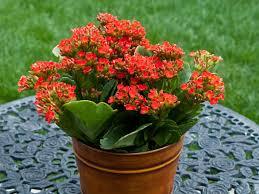 indoor flowering plants 7 flowering plants for indoor decorating