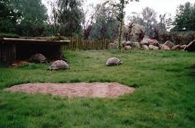 odense zoo 2002 alabra giant tortoise exhibit zoochat