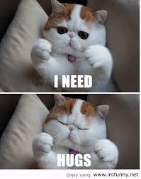 Clean Animal Memes - if your pets could talk adorable animal memes to make you smile