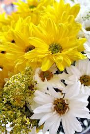 flowers white daisies yellow white u2014 bossfight