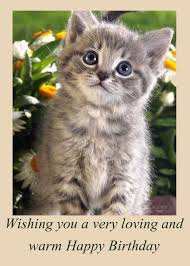 template free birthday ecards singing cats with free best 25 cat birthday wishes ideas on happy birthday
