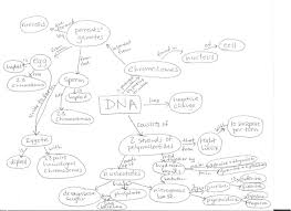Dna Mapping The Case Of The Missing Strawberries Rflp Analysis Coursesource