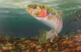 rainbow trout pictures free rainbow fish painting