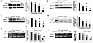 ijms free full text shikonin inhibits the migration and