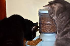 good nutrition essential for senior cats u0026 hill u0027s science diet