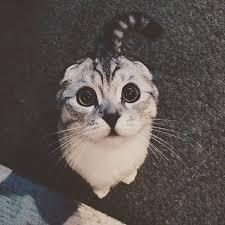 Cute Cat Meme Generator - meme template search imgflip