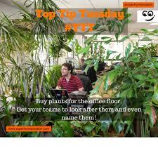Office Plants by Get Some Plants On The Office Floor Ttt U2013 Luke Todd U0026 Co