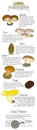 best 20 mushroom identification ideas on pinterest mushroom