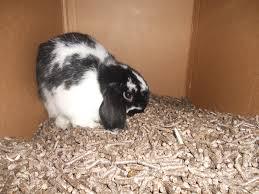rabbit material happy rabbit tip indoor digging box your rabbit