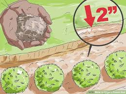 Flower Bed Edger How To Edge A Flower Bed 10 Steps With Pictures Wikihow