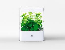 hydroponic kitchen herb garden zandalus net