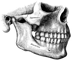 orthognathic surgery wikipedia