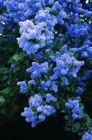 190 best landscaping trees shrubs images on pinterest flower