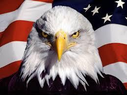Eagles Flag Steller U0027s Sea Eagle Clipart Cool Usa Flag Pencil And In Color
