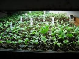 light and plant growth how does using artificial light to grow plants effect the growth of