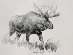 excellent drawing of a moose 65 1449