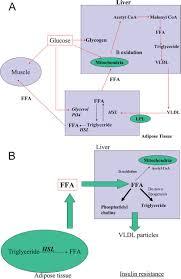 metabolic disturbances in non alcoholic fatty liver disease