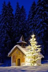 perfect snow covered tree christmas trees pinterest snow