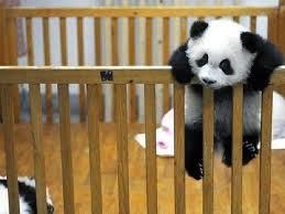 chambre bébé panda photo bébé panda bébé et décoration chambre bébé santé bébé