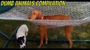 Stupid Animal Memes - dumb animals compilation youtube