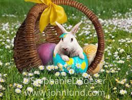 rabbit easter basket easter bunnies in easter eggs in easter baskets