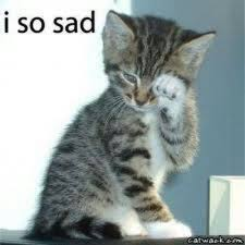 Sad Kitten Meme - funny sad cat pictures google search funny sad pinterest sad
