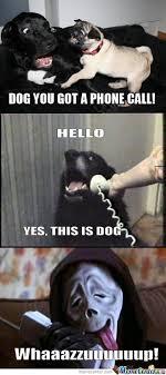 Wassup Meme - wassup dog funny status