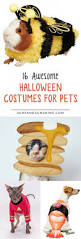 16 awesome halloween costumes for pets plus a few diy treats too