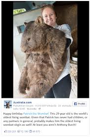 Wombat Memes - world s oldest wombat virgin cuck know your meme