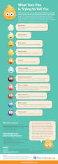 infographic if your could talk this is what it would tell