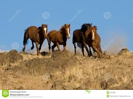 mustang horse running wild horses running royalty free stock photo image 2337685