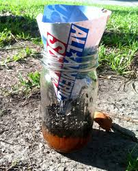 Homemade Fly Trap by I Decided To Make One Of Those Diy Fly Traps The Results Were