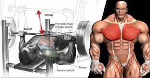 Bench Press For Biceps - 6 technique points to increase bench press weight gym guider