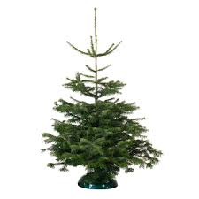 b u0026q christmas tree deal real nordman fir on sale for just 15