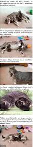 135 best animal stories images on pinterest animals funny