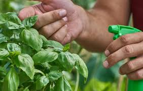 7 easy diy recipes for deterring garden pests diseases and
