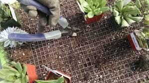 how to build a vertical succulent garden