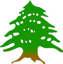 clipart cedar tree