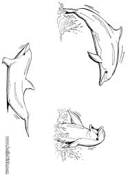 printable dolphin images dolphin coloring pages coloring pages playing dolphins free