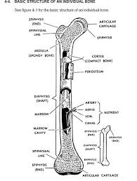 Learning Anatomy And Physiology Free Online Best 25 Physiology Ideas On Pinterest Human Anatomy And